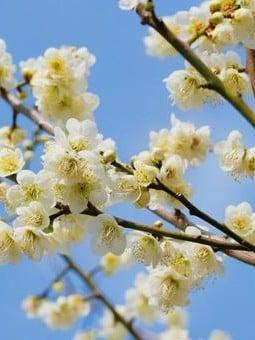 梅原 太郎弁護士