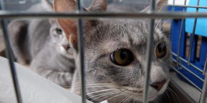「大きな一歩踏み出した」改正動物愛護法のポイントと残された課題