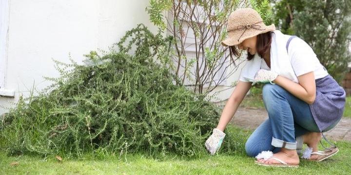 隣家の雑草「クズ」我が庭でたくましく育つ…知っておきたい民事調停の進め方