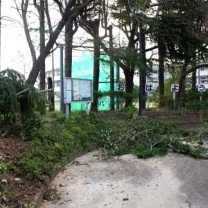 千葉台風被害で、弁護士会が無料電話相談を開始 「お困りごとをなんでも」