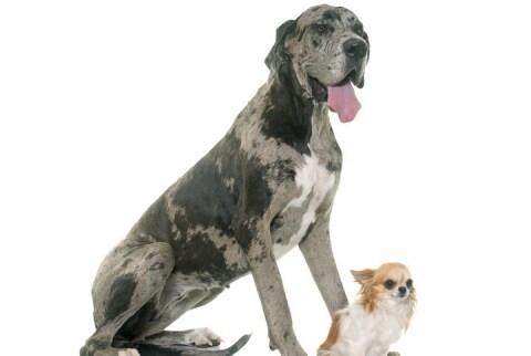 放し飼いの大型犬、孫を噛んで死なせる 責任を問われるのはだれ?