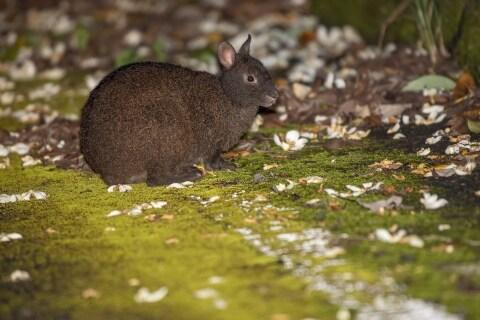 アマミノクロウサギ、辺野古ジュゴン…動物守る「自然の権利」掲げ、戦う弁護士の思い