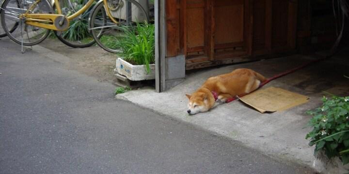 他人の敷地に勝手に入った「犬好きおばさん」を犬がガブリ!治療費は飼い主が払うの?