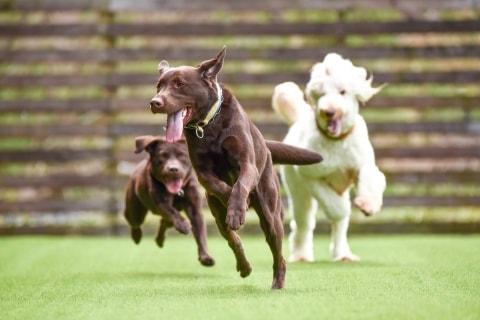 犬の事件簿「ドッグラン」で起きた悲劇 「愛犬」が咬まれて大ケガ、飼い主は謝罪なし