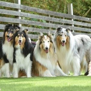 愛犬10頭との田園暮らし、新しい隣人から「うるさい」とクレーム…防音対策しないとダメ?