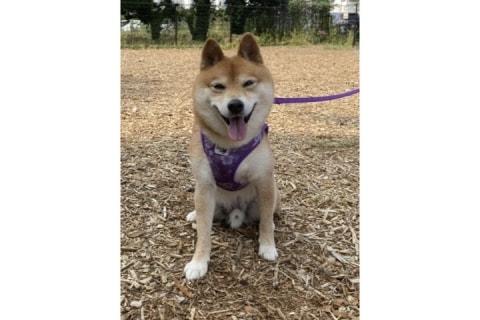 「ノーリードの犬をなくしたい」 愛犬被害の夫婦、体験談・アイデア募集サイト立ち上げ