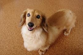 父親が「愛犬」を勝手に譲渡した! ペットを取り戻せるか?