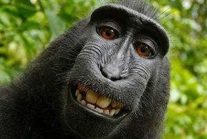 サルが写真家のカメラを奪って「自分撮り」 写真の「著作権」は誰のもの?