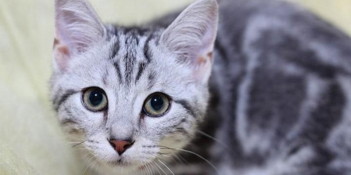 同棲カップルが「破局」 飼い猫の「親権」を手に入れるのは男性か、女性か?