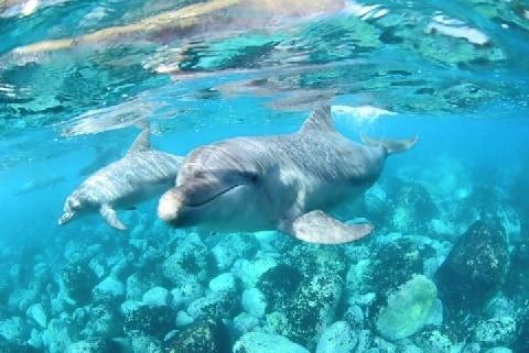 「イルカの命は他の動物よりも尊いのか」追い込み漁問題・太地町出身弁護士の見方