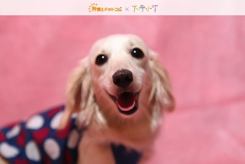 小犬にほえられて階段から転落、飼い主に治療費を請求できる?【小町の法律相談】