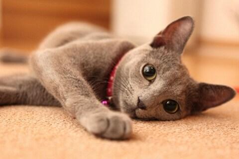 2年間飼った猫が逃げて「別の人」に飼われていた――本当の飼い主はどちら?