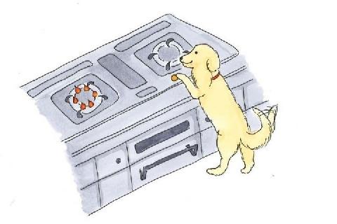 火災の原因は「飼い犬」?…前足でガスコンロ長押し、飼い主の責任はいかほど?