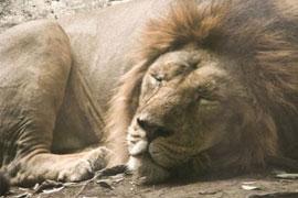 もし動物園のライオンが「ニセモノ」だったら? 入園料を返してもらえるか