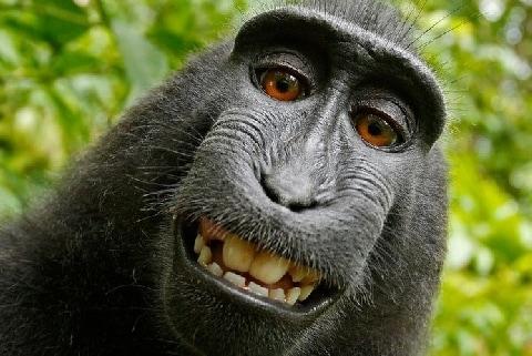 「サルの自撮り」著作権訴訟は何をもたらした? 日本でもあった「動物の権利」裁判