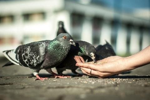 「鳩の餌やり」愛好家がパンくず撒いて、フンだらけ…やめさせられないの?