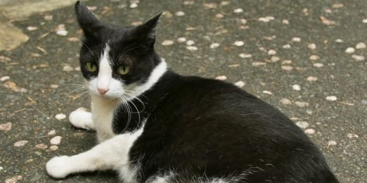 熊本の殺人未遂事件、ひっかいた「猫」は「殺処分」される? 心配する声続出