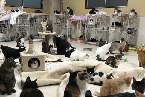 猫の保護団体で多頭飼育崩壊、元ボランティア「治療も受けられず、死んでいく」涙の告発