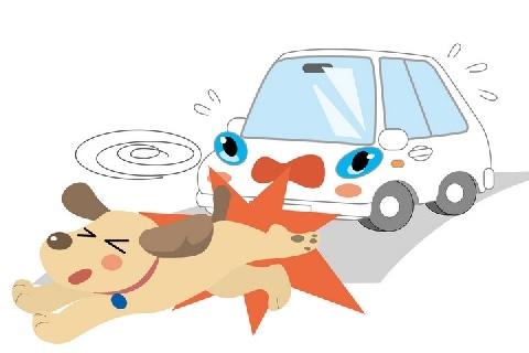 車にひかれた愛犬、「物損」扱いに悲しみは増すばかり「減点や罰金もありません」
