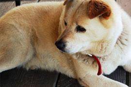 ペットの犬が他人にケガをさせたら犯罪!? 飼い主はどんな責任を負う?