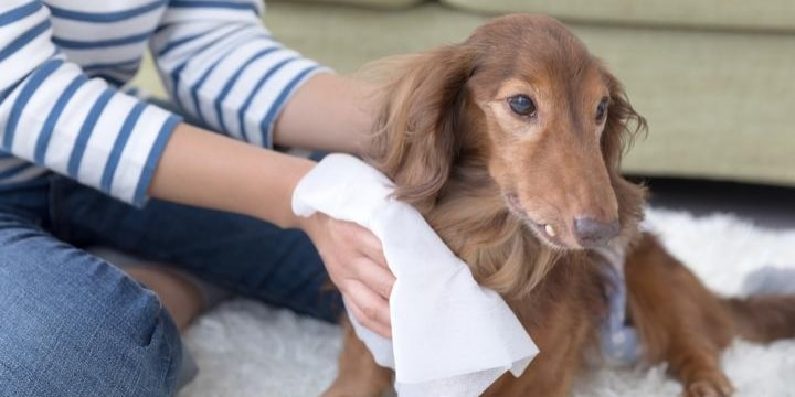 愛犬を連れて別居した妻「お世話したのは私」と自負も、買ったのは夫